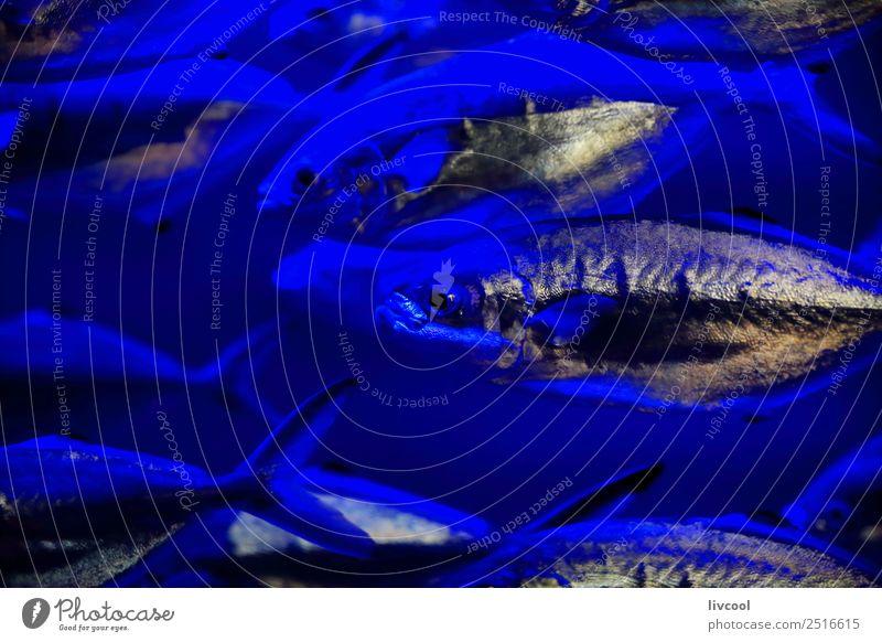 Silberfarbene Fische - Biarritz-Aquarium Lifestyle Tier Sand Küste Kleinstadt Stadt Hauptstadt Tiergruppe Schwimmen & Baden schön blau Verzweiflung
