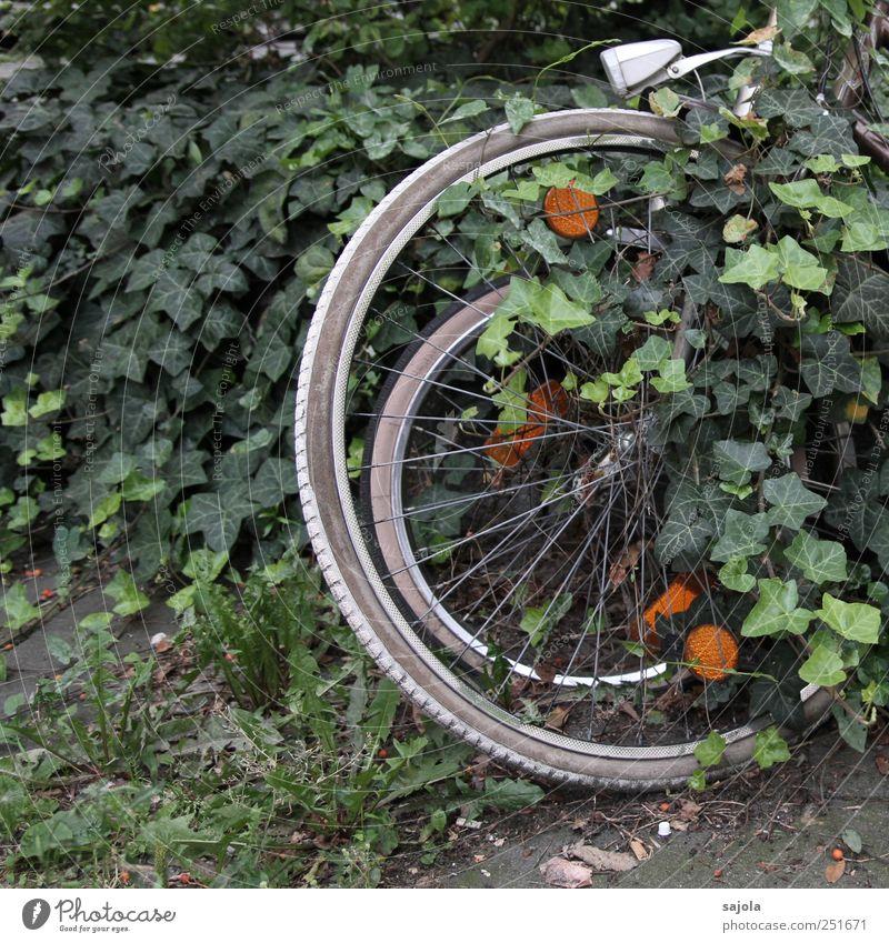 versteckt ruhn Natur grün Pflanze Umwelt Fahrrad stehen Rad verstecken parken Efeu ruhen bewachsen