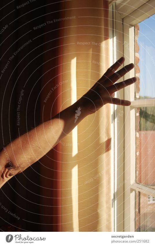 nach der sonne greifen. Wohnung Raum Frau Erwachsene Haut Arme Hand Finger 1 Mensch Fenster Holz Glas berühren dunkel gelb schwarz weiß Gefühle Euphorie Kraft