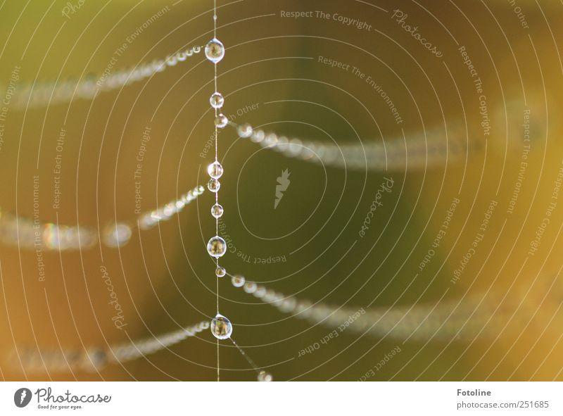 Tropfenkette Natur Wasser Umwelt natürlich hell Wassertropfen nass Urelemente Schmuck Nähgarn Spinnennetz