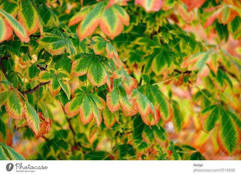 Natur Pflanze schön Farbe grün Sonne Landschaft Baum rot Blatt Wald gelb Umwelt Herbst natürlich Garten