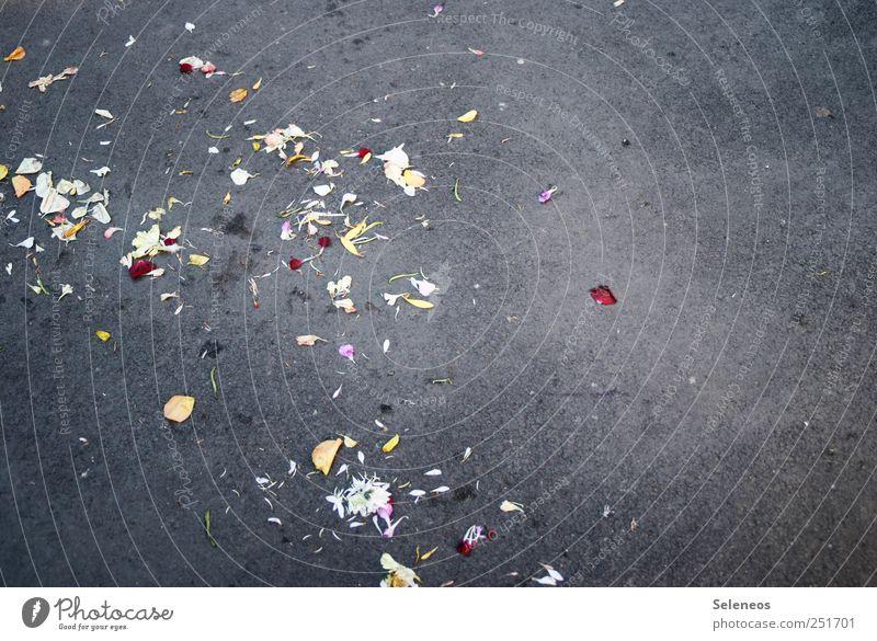 Das Blumenkind ist weggerannt Feste & Feiern Valentinstag Umwelt Natur Pflanze Blüte Straße Stein Beton Fröhlichkeit Farbfoto Außenaufnahme Menschenleer Tag