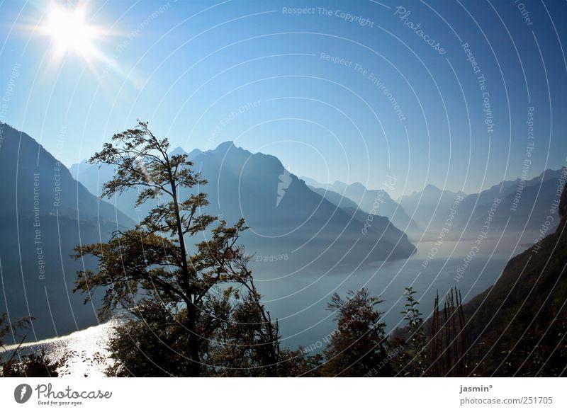 Verliebt in den Moment Himmel Natur schön Pflanze Sonne Umwelt Landschaft Glück Stimmung See Warmherzigkeit Sehnsucht Sympathie Wolkenloser Himmel