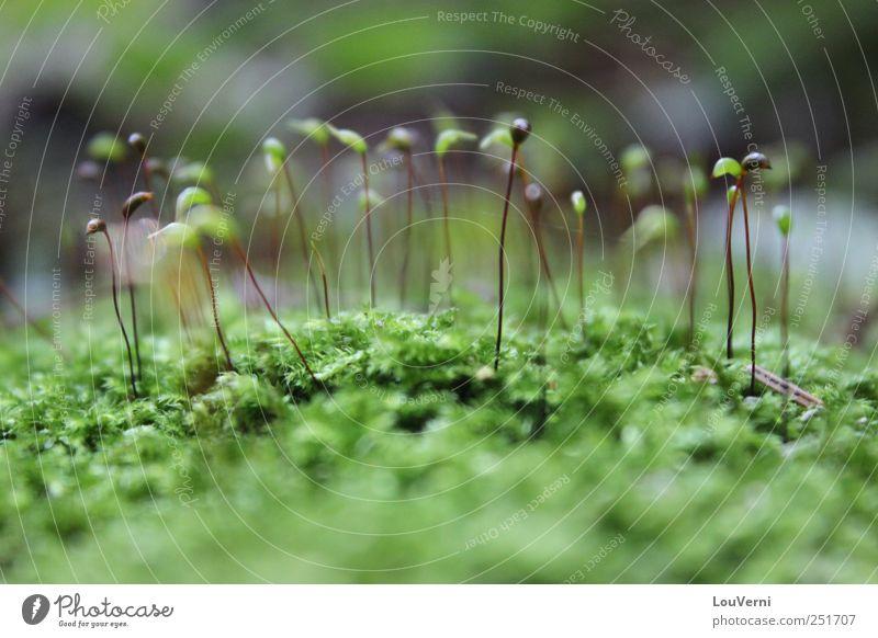 grün Natur Pflanze Sommer Tier Herbst Idylle niedlich Moos Inspiration Sympathie Grünpflanze Wildpflanze