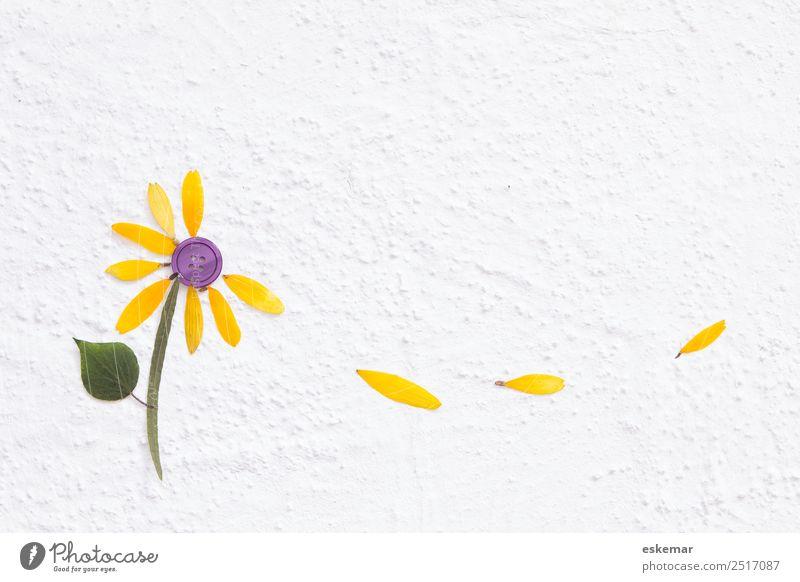 Herbst Natur Wind Sturm Blume Blatt Blüte Beton Zeichen Blühend Duft fallen ästhetisch außergewöhnlich schön nah natürlich oben gelb violett weiß