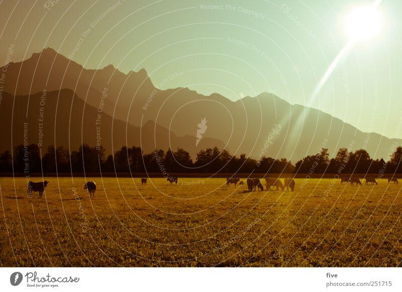 herbst Umwelt Natur Landschaft Erde Himmel Wolkenloser Himmel Sonne Sonnenaufgang Sonnenuntergang Sonnenlicht Herbst Schönes Wetter Baum Gras Sträucher Wiese