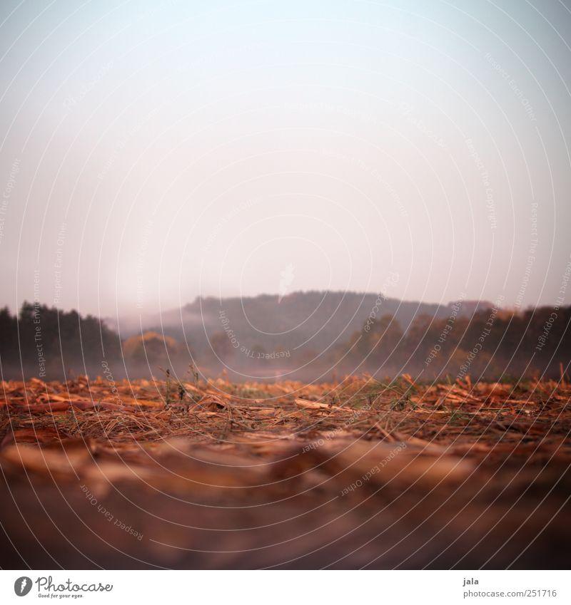 CHAMANSÜLZ   morgens Umwelt Natur Landschaft Pflanze Himmel Herbst Nebel Gras Sträucher Grünpflanze Nutzpflanze Feld Wald natürlich Farbfoto Menschenleer