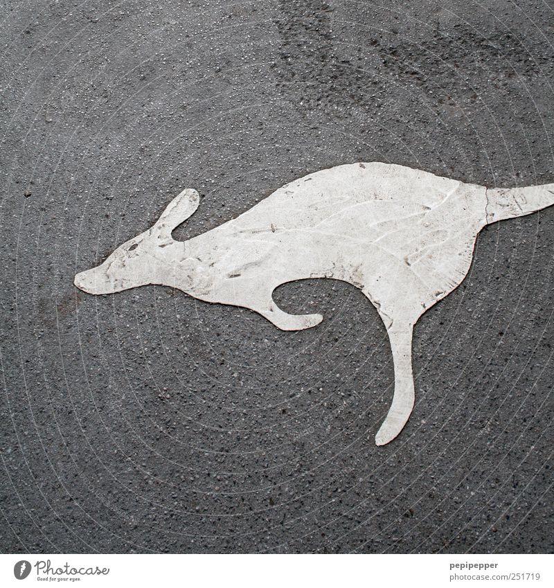 ich weiß nicht ob es ein... Tier grau springen Stein Erde dreckig laufen Tourismus Wildtier Hinweisschild Asphalt Zeichen Zoo Gemälde Warnschild