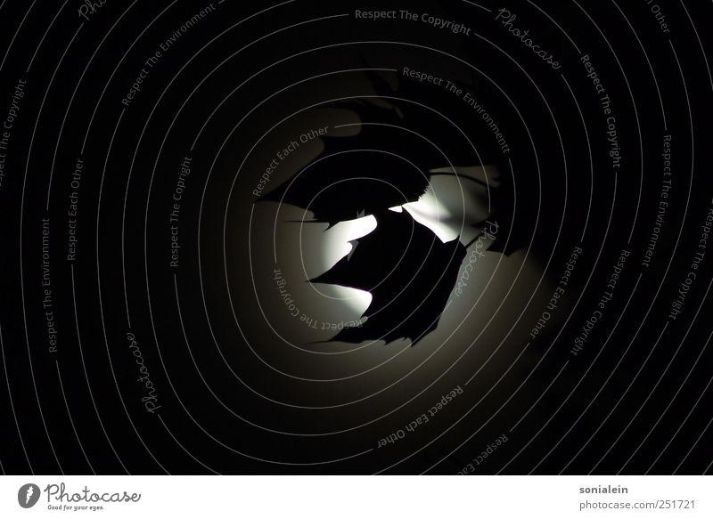 Mondlicht und Platanenblätter Pflanze Nachthimmel Vollmond Baum Blatt dunkel gruselig schön grau schwarz weiß Romantik ruhig Farbfoto Schwarzweißfoto
