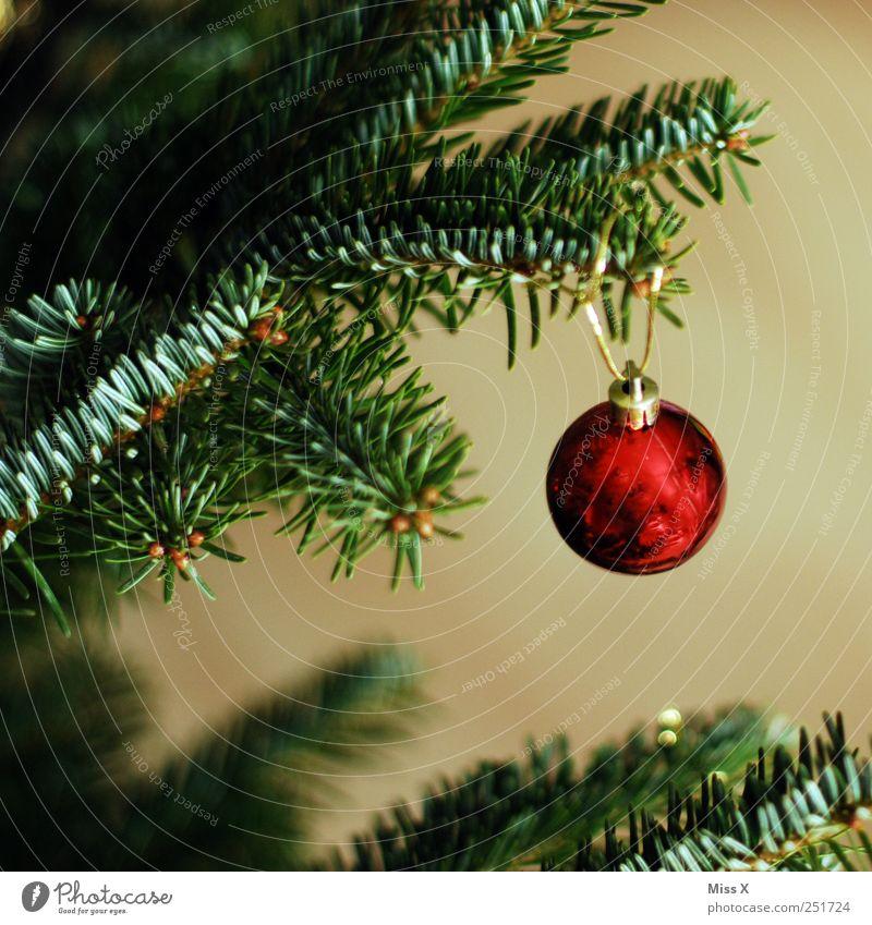 eine Kleine glänzend rund rot Christbaumkugel Tannenzweig Weihnachtsbaum Weihnachtsdekoration Dekoration & Verzierung Tannennadel gold Farbfoto mehrfarbig