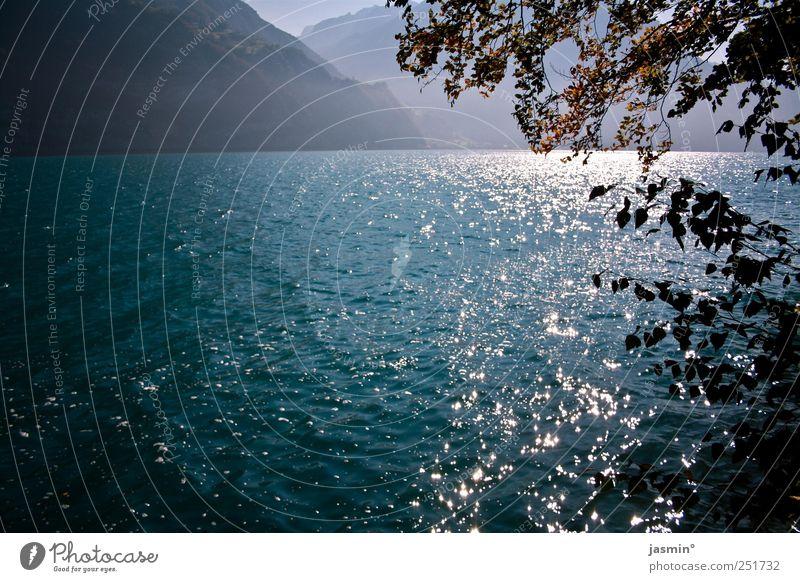 Herbst am See Umwelt Natur Landschaft Sonnenlicht Schönes Wetter Baum Sträucher Seeufer Glück Zufriedenheit Gelassenheit ruhig Farbfoto mehrfarbig Außenaufnahme