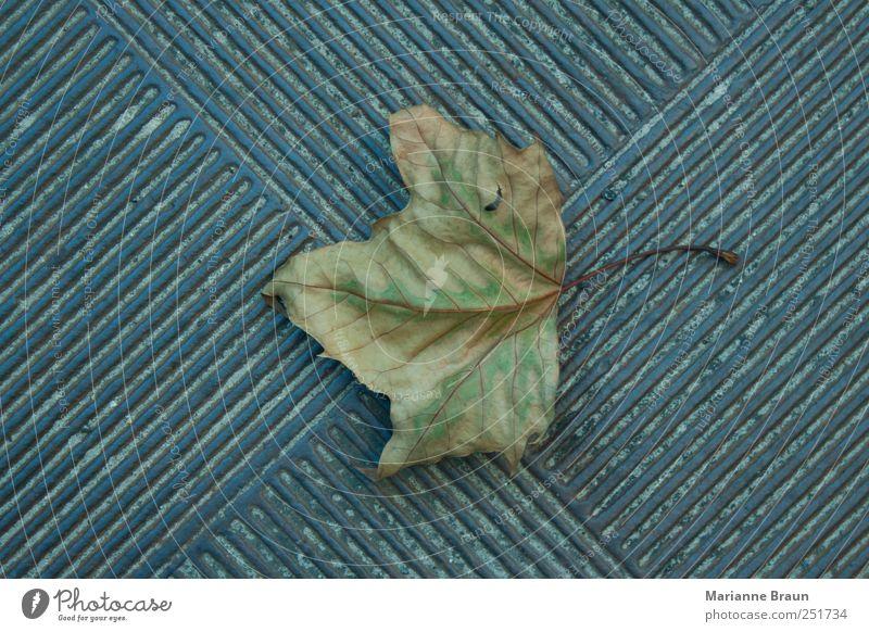 Ahornblatt grün Blatt Straße Herbst grau Sand Metall braun Hintergrundbild natürlich Streifen Vergänglichkeit Jahreszeiten Eisen