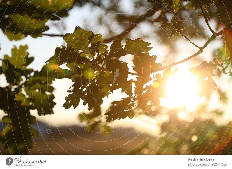 goldener Oktober Natur grün Baum Sonne Erholung Einsamkeit Blatt Ferne Umwelt gelb Herbst natürlich hell Horizont träumen Park