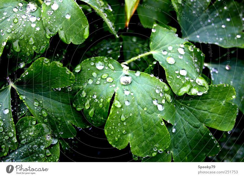 Raindrops Pflanze Wassertropfen Wetter Regen Blatt Grünpflanze nass grün Farbfoto Außenaufnahme Nahaufnahme Menschenleer Reflexion & Spiegelung