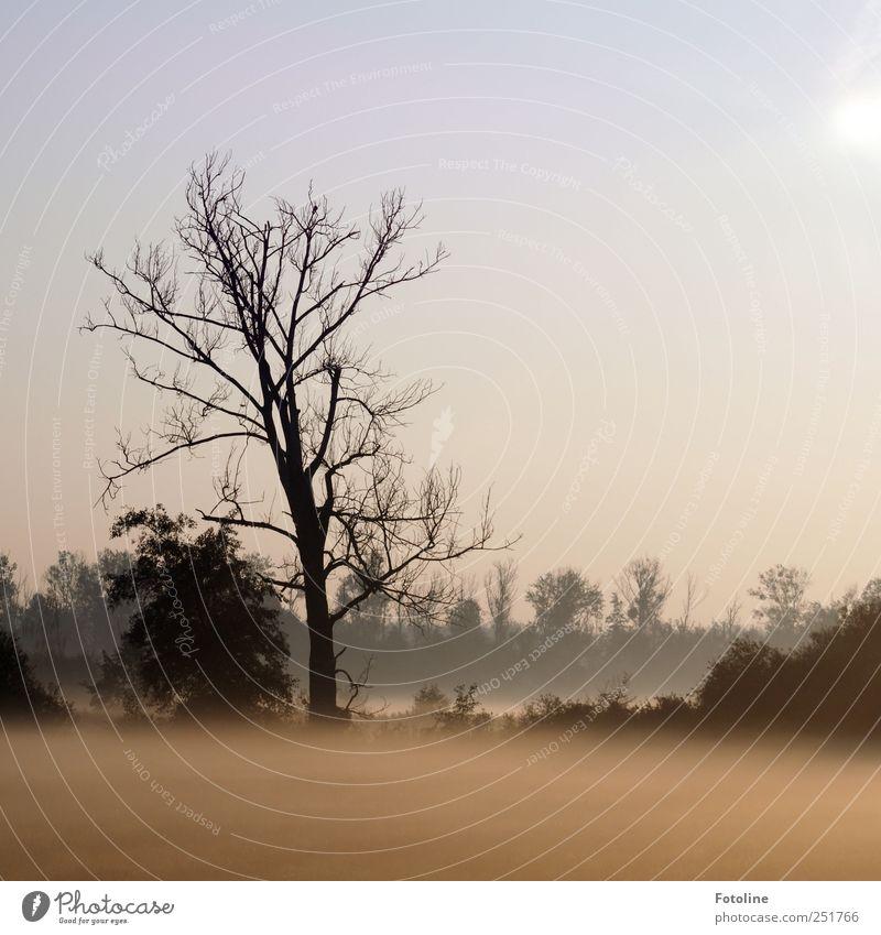 Morgenstimmung Umwelt Natur Landschaft Pflanze Herbst Nebel Baum Sträucher Wiese Wald dunkel hell natürlich schwarz Farbfoto Gedeckte Farben Außenaufnahme