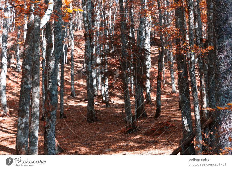 """""""Zeit""""-Umstellung Umwelt Natur Landschaft Erde Herbst Baum Blatt Wald Hügel Holz Leben Ausdauer standhaft Erschöpfung Beginn Verfall Vergänglichkeit"""