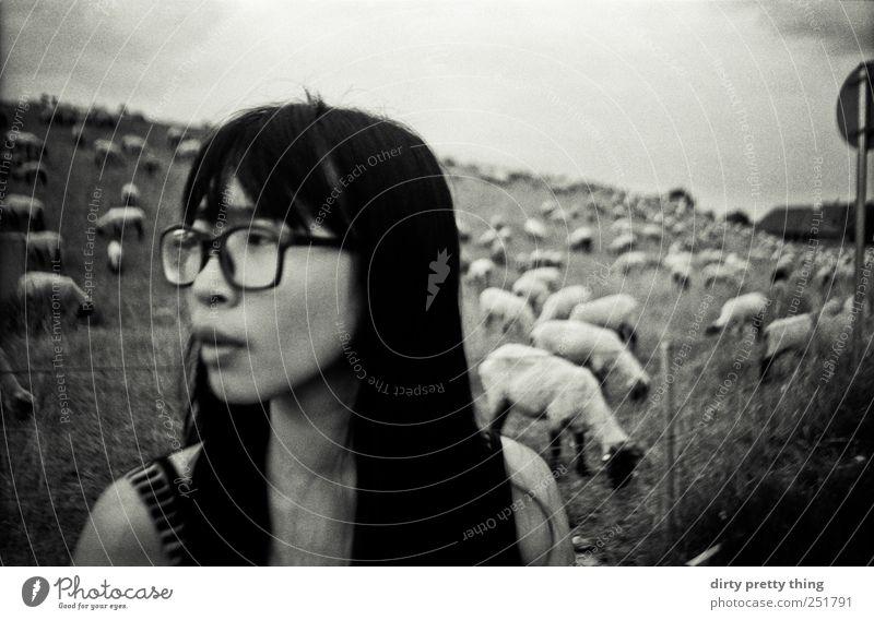 meet the sheeps Frau Mensch Jugendliche Sommer feminin Erwachsene Ausflug Brille entdecken 18-30 Jahre Nutztier Herde Asiate Tierfamilie