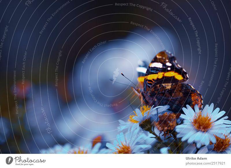 Leuchtender Schmetterling Natur Pflanze Tier Herbst Blume Blüte Astern Garten Park Wildtier Kleiner Fuchs Insekt Flügel 1 leuchten wild weich blau Hoffnung