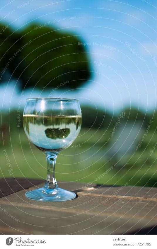 Ehrlich und lebensnah ... Schönes Wetter genießen Glas Weinglas Weißwein voll Garten Terrasse Freizeit & Hobby Wochenende Erholung Reflexion & Spiegelung