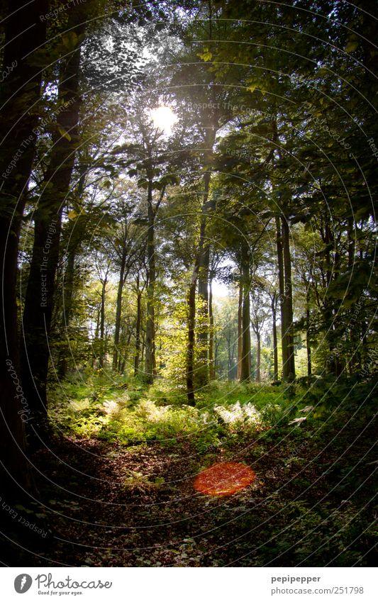 Durchblick Pflanze grün Sommer Baum Einsamkeit Landschaft ruhig Wald Wege & Pfade Holz Freizeit & Hobby Jagd Moos atmen Gefühle