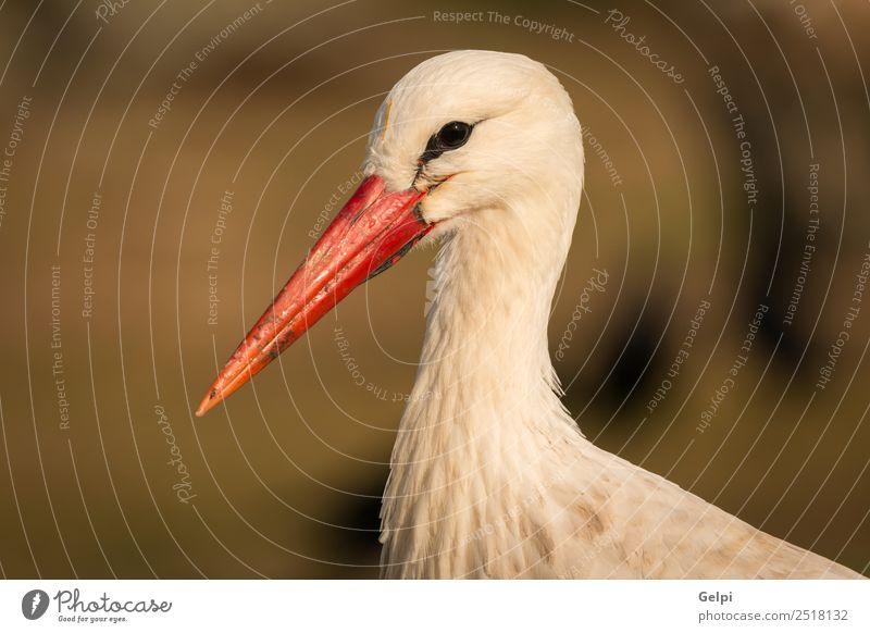 Natürliches Profil eines eleganten Storches auf dem Feld schön Freiheit Familie & Verwandtschaft Paar Erwachsene Natur Tier Wind Gras Vogel fliegen lang wild