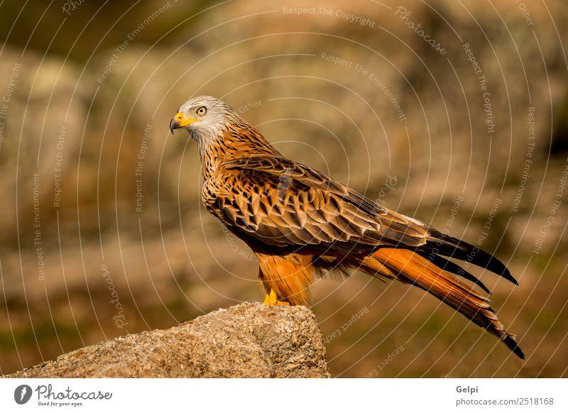 Fantastischer Vogel auf dem Feld mit einem schönen Gefieder. elegant Freiheit Natur Tier Gras Flügel niedlich wild grün weiß Farbe Feder Milan Schnabel sonnig