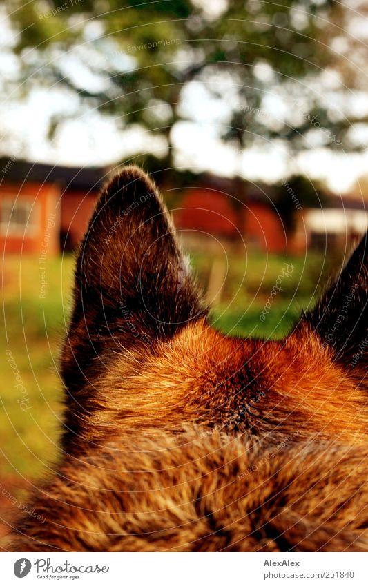 Plüsch auf der Pirsch Himmel grün Baum Pflanze Freude Tier Umwelt Landschaft Garten Gras Hund Stein braun Ohr beobachten Idylle