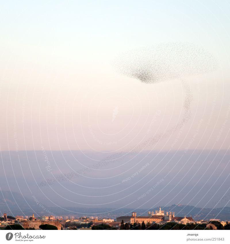 Die Vögel Himmel Natur Tier Umwelt Landschaft Horizont Vogel fliegen Luftverkehr außergewöhnlich viele Italien skurril Zusammenhalt Teamwork Verstand