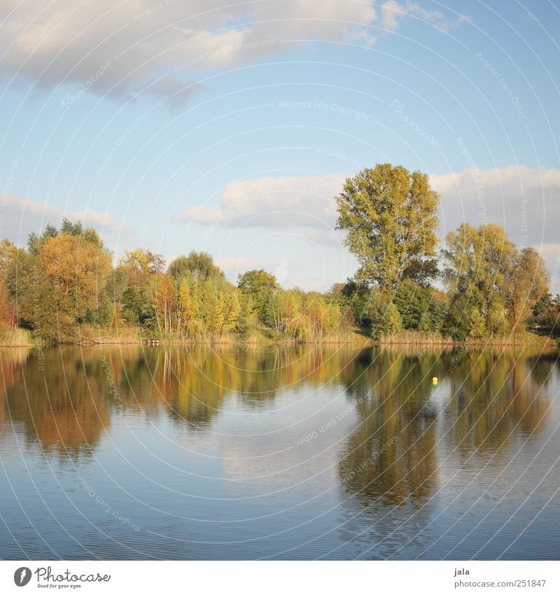 draußen am see Umwelt Natur Landschaft Pflanze Himmel Wolken Herbst Baum Sträucher See natürlich blau gold grün Farbfoto Außenaufnahme Menschenleer