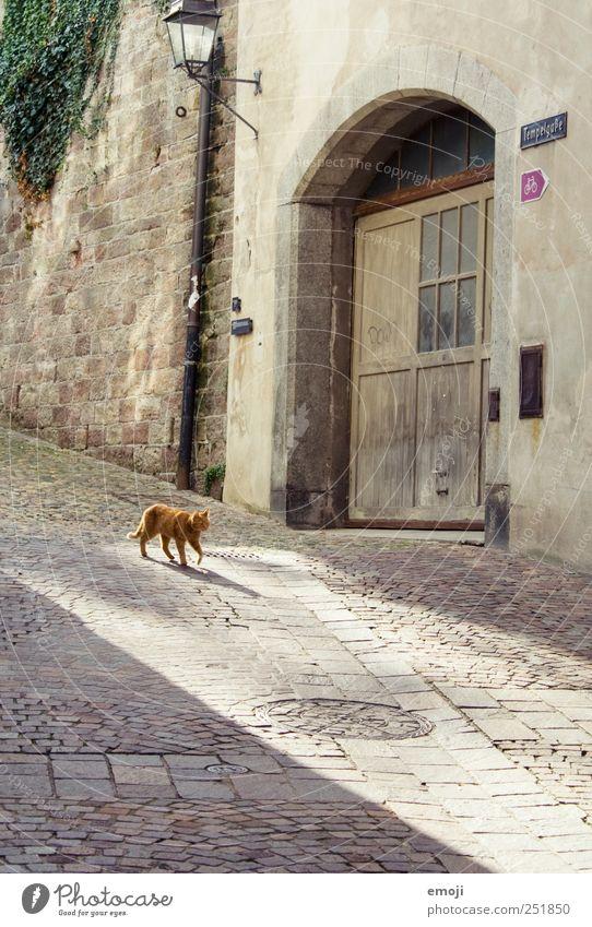 Turmgasse mit Büsi Dorf Haus Mauer Wand Haustier Katze 1 Tier gehen Kopfsteinpflaster Pflastersteine Gasse Morgen Farbfoto Außenaufnahme Menschenleer Tag