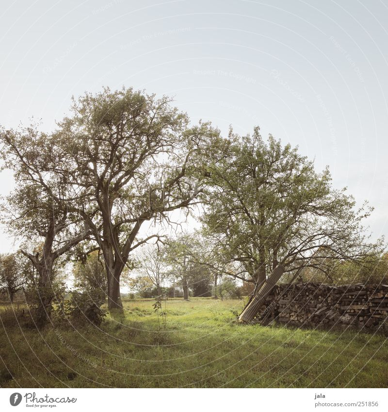 querfeld Umwelt Natur Landschaft Pflanze Himmel Herbst Baum Gras Grünpflanze Wiese Feld natürlich blau braun grün Farbfoto Außenaufnahme Menschenleer