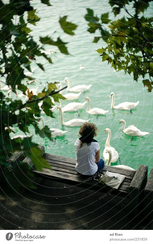 die Frau am Schwanensee Rücken 1 Mensch Natur Wasser Baum Seeufer Tier Wildtier Tiergruppe beobachten genießen hocken Farbfoto Außenaufnahme Vogelperspektive