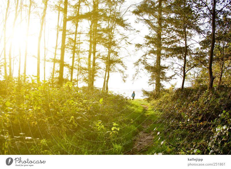 ein männlein steht im walde Mensch Himmel Natur Wasser Baum Pflanze Sonne Sommer Ferien & Urlaub & Reisen Tier Ferne Wald Freiheit Umwelt Landschaft Gras