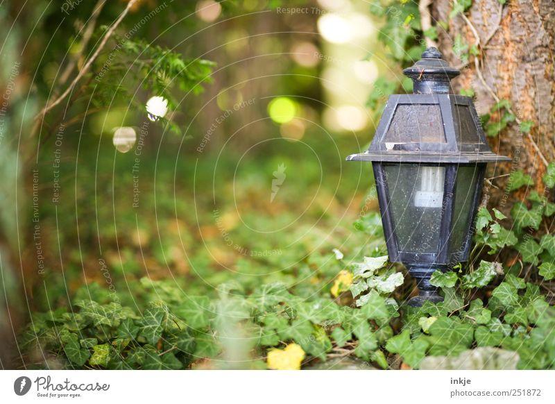 alter Garten Natur alt grün Baum schwarz Herbst Tod Holz Garten Metall Lampe Park Glas dreckig Sträucher Trauer