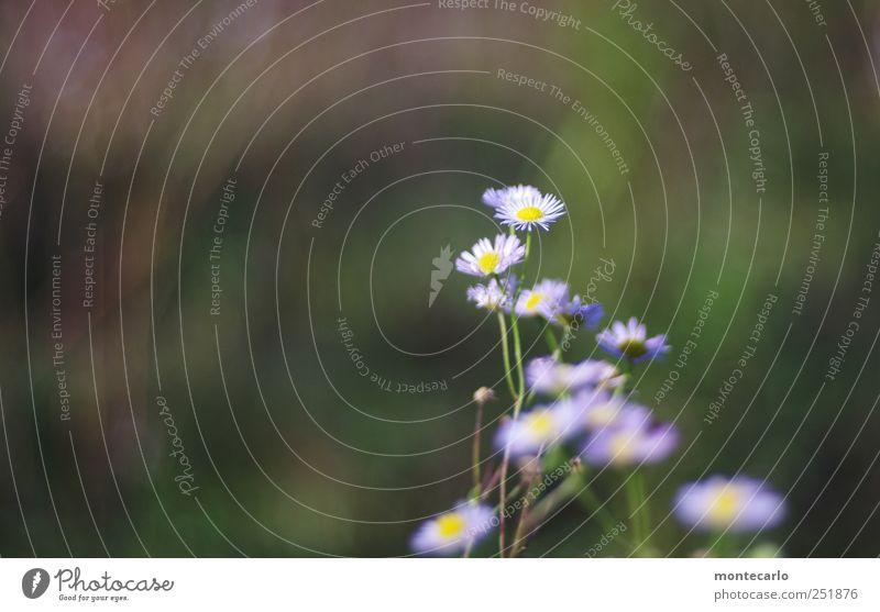 Blümchen Natur blau grün Pflanze Blume Umwelt Herbst Schönes Wetter Grünpflanze Wildpflanze