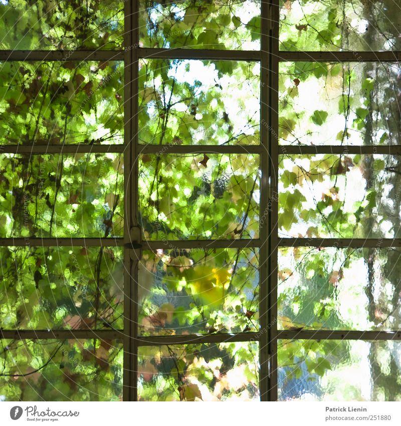 Grüne Aussichten Natur Pflanze Umwelt natürlich Sträucher Grünpflanze