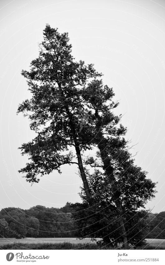 Gemeinsam...... Himmel Natur weiß Baum Blume schwarz Wald Wiese Umwelt Landschaft Gras Freundschaft Zufriedenheit Feld Kraft natürlich