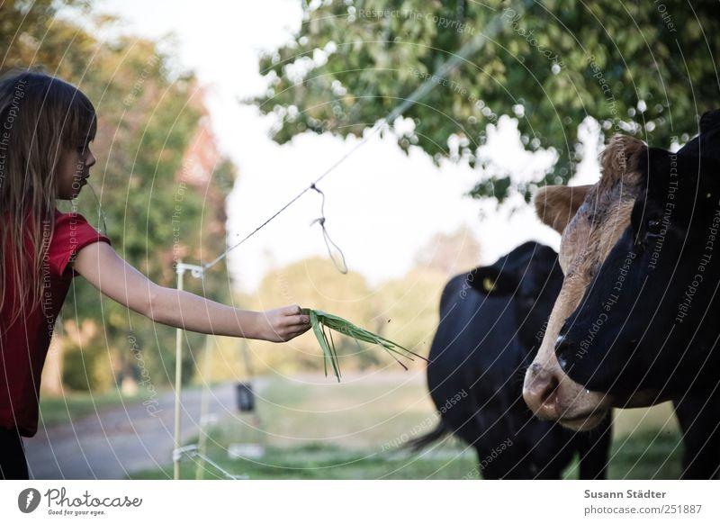 [CHAMANSÜLZ 2011] teilen Kind Baum Mädchen schwarz Tier Kindheit Freundschaft Wildtier Tiergruppe Tiergesicht Kuh Appetit & Hunger langhaarig Treue füttern
