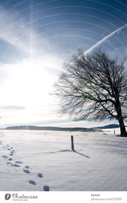 Spuren im Schnee Umwelt Natur Landschaft Pflanze Himmel Wolken Sonne Sonnenlicht Winter Schönes Wetter Eis Frost Baum Buche Hügel hell kalt blau weiß