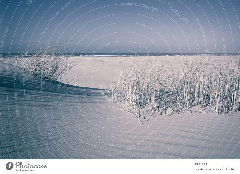 Spiekeroog | ...last but not least Strand Erholung Landschaft Sand Insel Nordsee genießen Dünengras