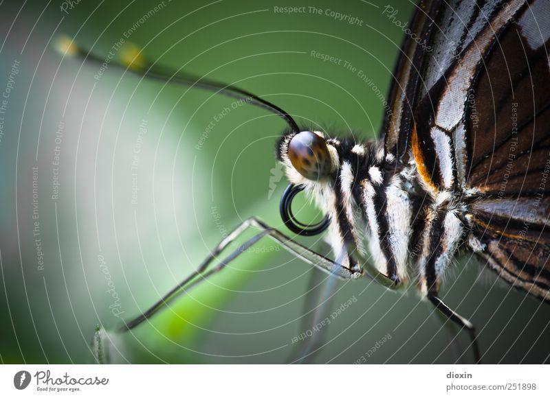 you´re my butterfly Natur Tier klein Beine sitzen natürlich Tiergesicht Flügel Fell Zoo Schmetterling leicht Leichtigkeit kuschlig Fühler filigran