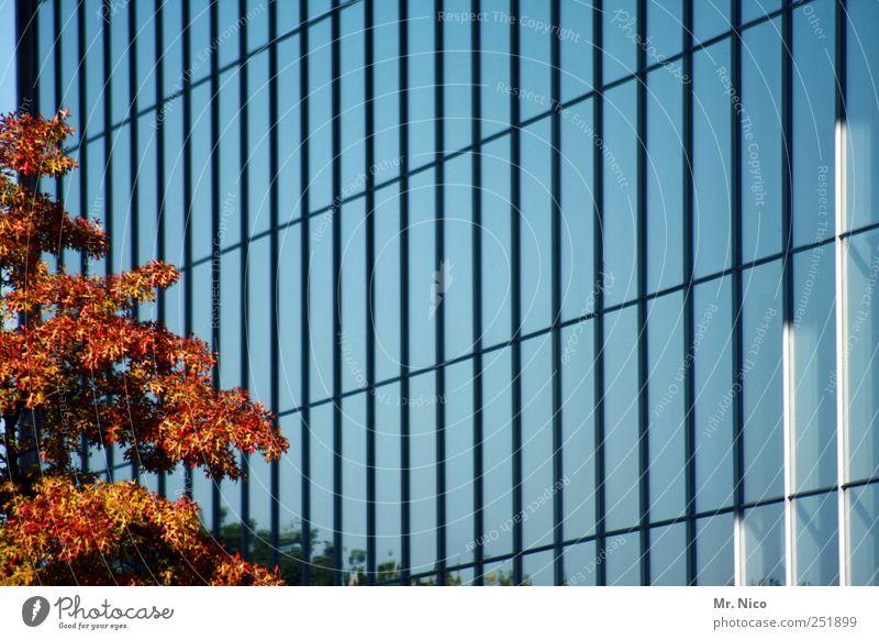 baum haus Umwelt Schönes Wetter Baum Stadtzentrum Hochhaus Bankgebäude Bauwerk Gebäude Architektur Fassade Häusliches Leben Wachstum Glas Glasfassade Herbst