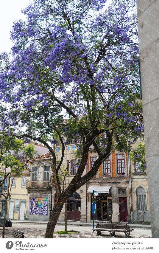 Blühende Altstadt Ferien & Urlaub & Reisen Stadt Baum Haus Wand Mauer Fassade Städtereise Stadtzentrum Portugal Porto