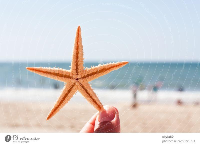 Urlaubsgrüsse Ferien & Urlaub & Reisen Sommer Strand Meer Seestern Erholung Finger festhalten Meerestier Stern (Symbol) Sommerurlaub Badeurlaub stachelig