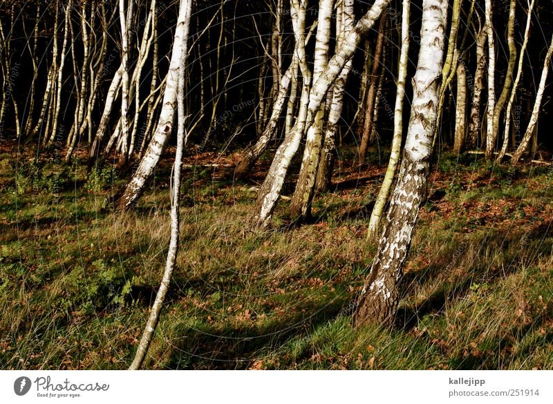 westwinde Umwelt Natur Landschaft Pflanze Tier Erde Klima Baum Gras Sträucher Moos Blatt Grünpflanze Wald nachhaltig Kontrast Farbfoto Außenaufnahme Licht