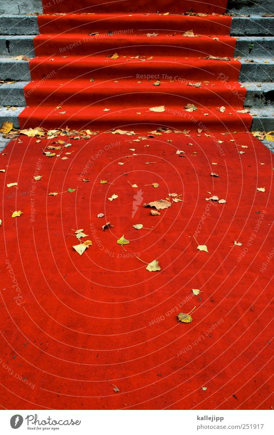 goldregen rot Wege & Pfade Stil elegant Erfolg Zukunft einzigartig Kultur planen Macht Veranstaltung Gesellschaft (Soziologie) Reichtum Herbstlaub Optimismus