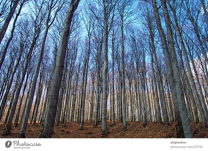 Wald vor Bäumen Baum Frühling Ast Baumstamm Buche