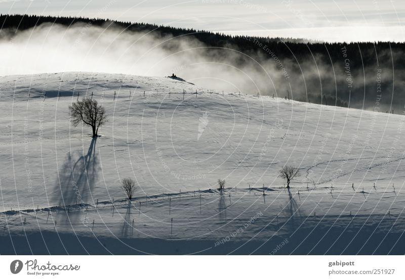 Winterlandschaft II Natur weiß Baum Ferien & Urlaub & Reisen ruhig schwarz Ferne kalt Schnee Berge u. Gebirge Landschaft Nebel Tourismus frei frisch