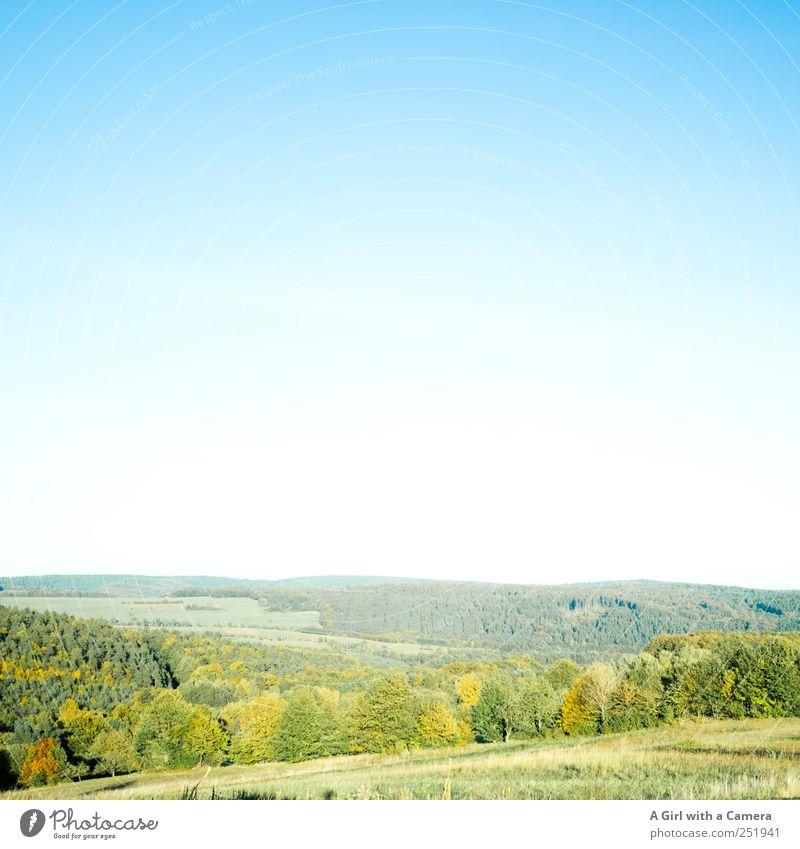 so schön ist die Rhön! Umwelt Natur Landschaft Pflanze Himmel Wolkenloser Himmel Sonnenlicht Herbst Wetter Schönes Wetter Baum Sträucher Blatt Indian Summer