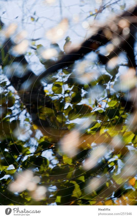 kalt feucht : herbst Pflanze Wasser Himmel Herbst Schönes Wetter Baum Blatt Wald dunkel hell nass blau braun grün weiß Endzeitstimmung Tod Vergänglichkeit